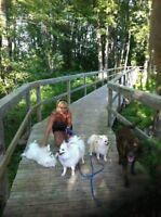 Ottawa Dog Boarding - 25 Years Experience - Kennel Free