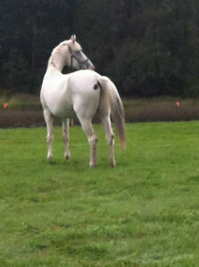 Two horses for free lease