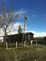 Woodtec Tree Services Professional tree removal & pruning