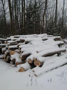 Uncut Firewood roughly 2.5 full bush cords