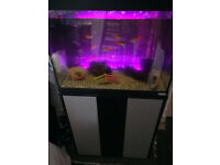 3ft tropical fish tank including fish