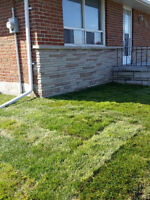 Sod Installation from 1$ a square a foot!!
