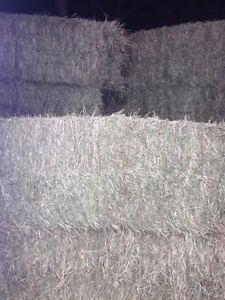 Big Square Hay Bales, Hay For Sale