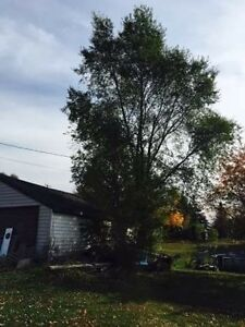 Affordable tree service  Peterborough Peterborough Area image 3