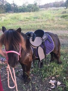 Shetland Pony Mare Beachmere Caboolture Area Preview