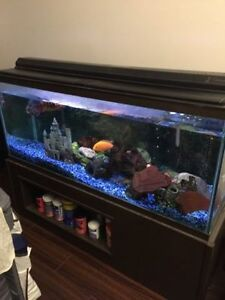 65 Gal Fish tank set with stand and canister filter and etc.