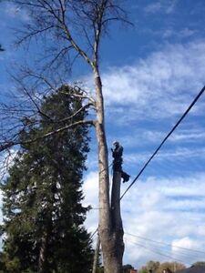 Emondage elagage arbre branches buche bois couper