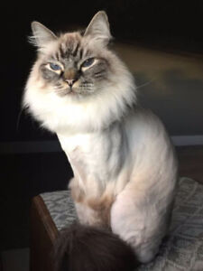 STRESS FREE MOBILE CAT GROOMING - LET US COME TO YOU!