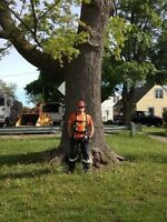 Ash tree removals and any other tree work