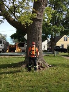 Tree removals, storm clean up , pruning, and felling of trees Cambridge Kitchener Area image 1