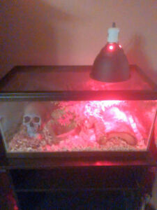 Reptile tank and accroiess