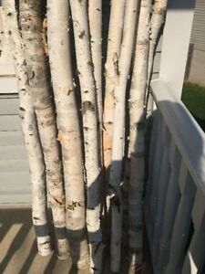 Beautiful Birch Poles/Logs