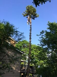 Tree Removal >Emergency 24/7 Removal Available Kitchener / Waterloo Kitchener Area image 3