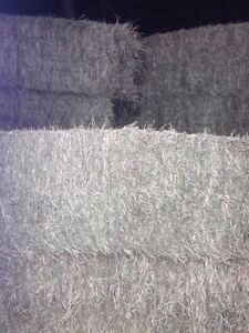 Big Square Hay Bales, Hay For Sale