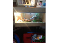 2 bearded dragons for sale plus tank needing a new hom