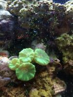 Salt Water Corals