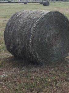 Timothy hay grass mix  4x5 round bales  will load only 4 left.