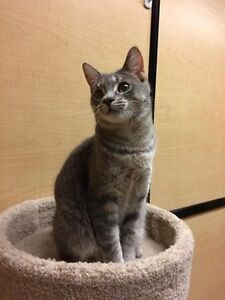 CHloe is Up at PET SMART for Adoption through Pet Save