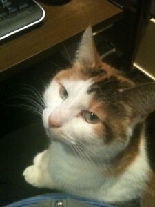 LOST Cat in Airdrie