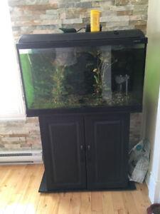 Aquarium avec meuble noir 60 gallons