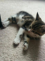 Friendly 11 Week Old Kittens Available For Adoption