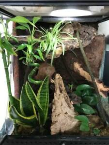 Created Gecko with Planted Terrarium