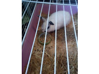 rabbit looking for loving home , she is female , white with black markings