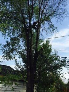 Affordable tree service  Peterborough Peterborough Area image 4