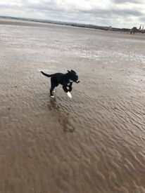 Dog Walking for Edinburgh City