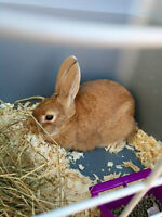 Young Bunny for sale
