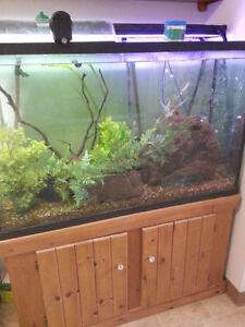 110 gallon aquarium tank