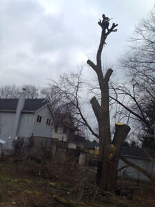 Tree REMOVAL-TREE Triming/Pruning>FALL SPECIAL...... Kitchener / Waterloo Kitchener Area image 9
