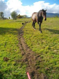 Standard Bred Horse 'Lucky' 16hh and 15yrs September 1st 2015 Lilydale Launceston Area Preview