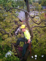 Complete Tree Services Storm Damage Limb Removal Pruning