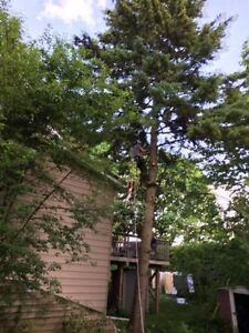Tree Removal >Emergency 24/7 Removal Available Kitchener / Waterloo Kitchener Area image 2