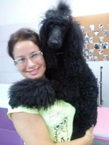 Dog Grooming House Calls