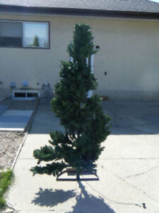 6 foot Christmas tree and orniments. (needs a stand)
