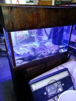 56 Gallon Salt Water Tank