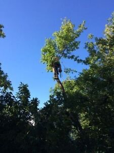 Tip Top Tree Removal and Services Kitchener / Waterloo Kitchener Area image 7