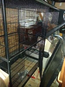 Large flight cage   Can be used for birds, sugar babies Kitchener / Waterloo Kitchener Area image 2