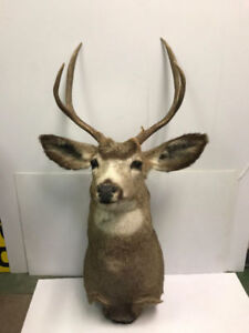 DEER TAXIDERMY, DEER HEAD MOUNT FOR SALE