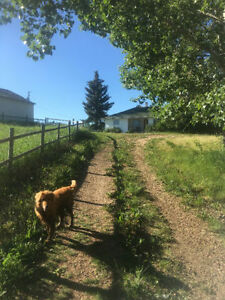Country Farm Living in Wheatland County (Drumheller, Strathmore)