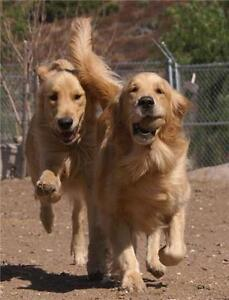 Affordable and Reliable Dog Walking & Pet Sitting Services Windsor Region Ontario image 10