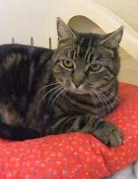 "Adult Female Cat - Tabby - Brown: ""Betsy"""