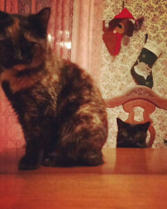 Home needed for 2 adult cats ASAP