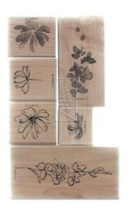 Stampin Up Stamp Sets Retired