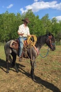 Horse training and trimming