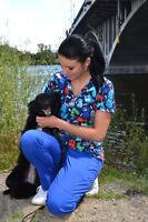 AMI POUR LA VIE: Taxi pour animaux à votre domicile