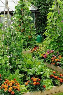 Land for a decorative market garden Nashua Byron Area Preview