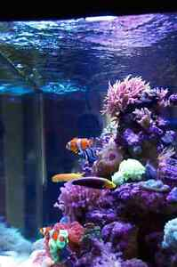 Saltwater brackish and fresh water aquarium tank maintenance.